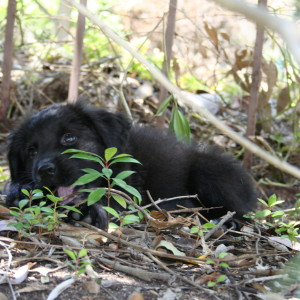 Gets Love Pets | Meet Tiger Lily